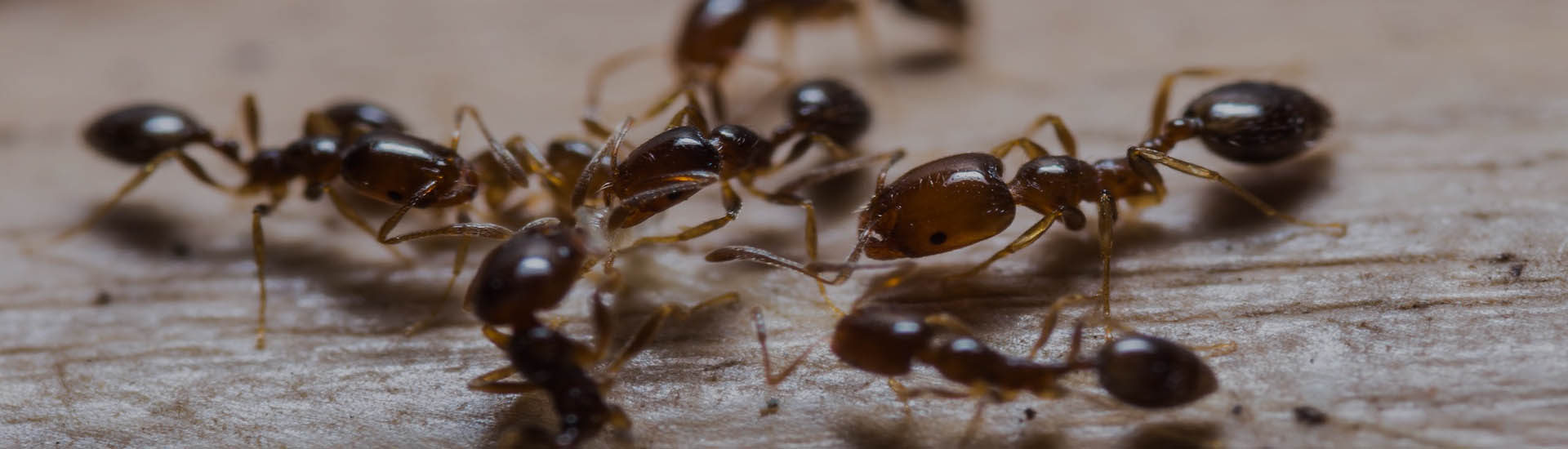 Quality and Affordable Ant Control