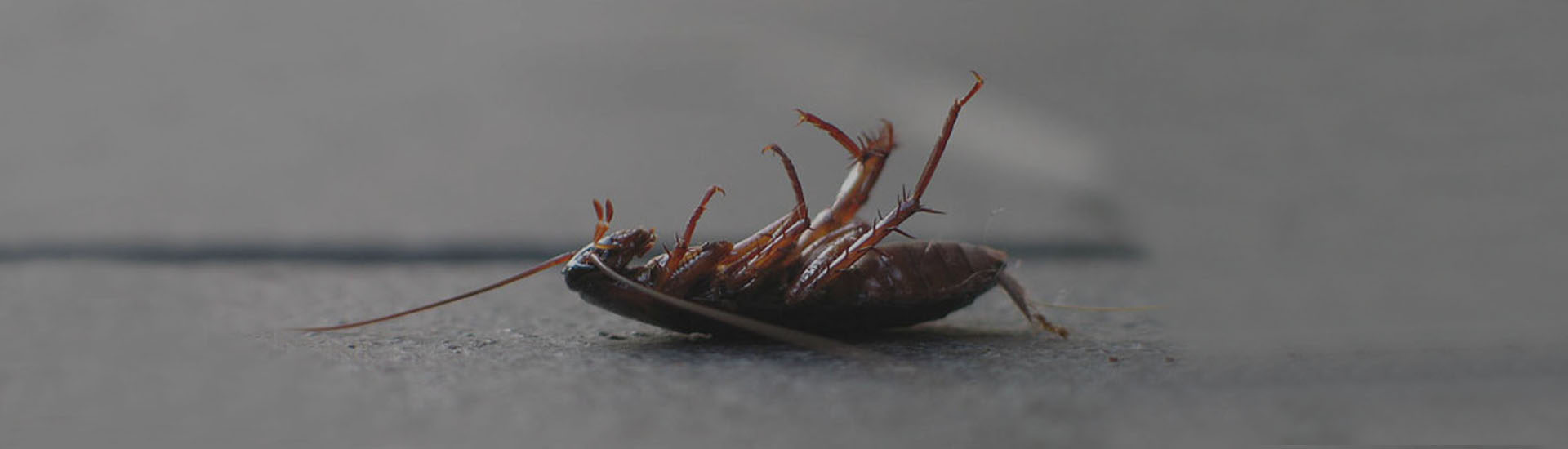 Cockroaches are extremely resilient pests