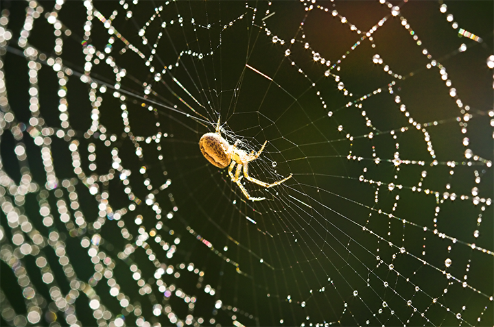 Spider Control Tips For Upcoming Summer