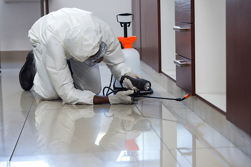 Same Day Pest Inspections