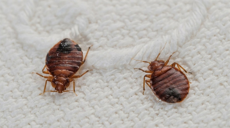 Oxnard Bed Bug Removal